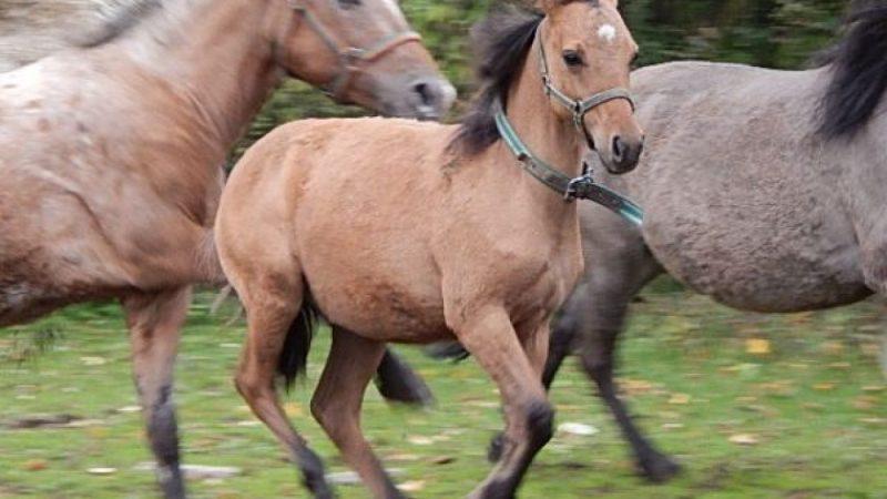 Szkółka jazdy konnej w Siedliskach