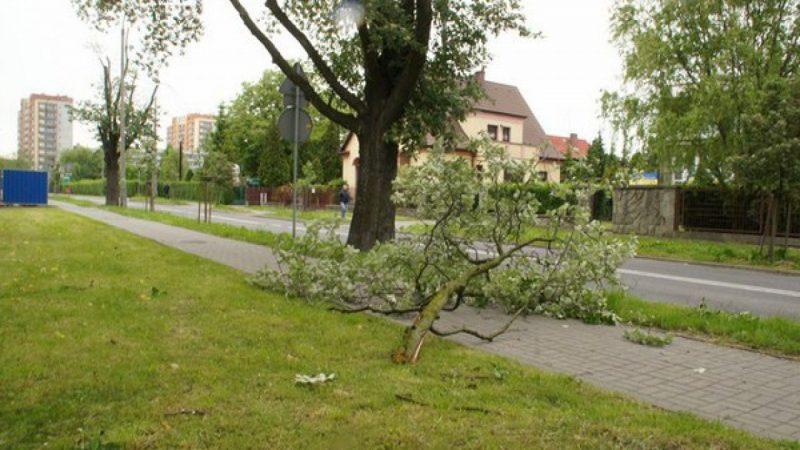 Silny wiatr powalał drzewa