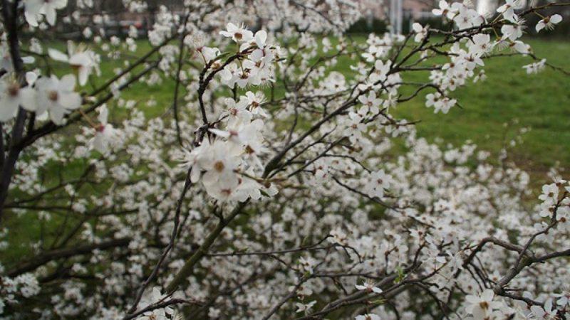 Wiosna w Raciborzu