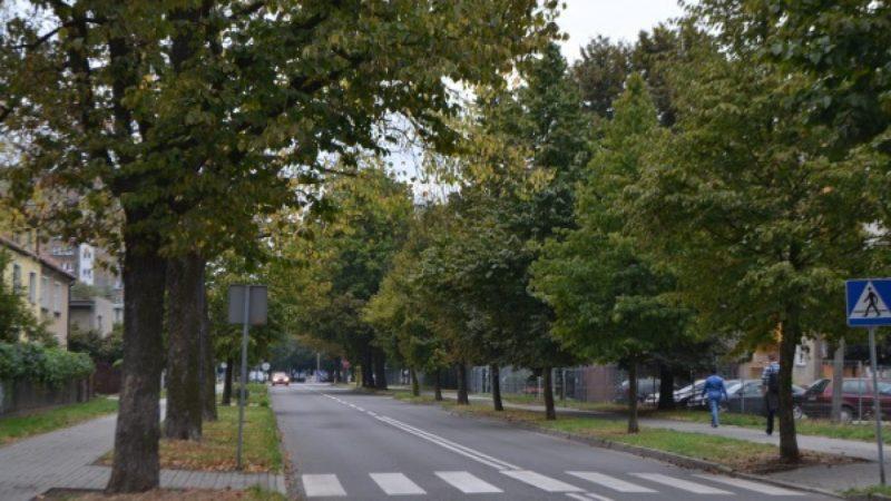 Aleja leszczyny wzdłuż Słowackiego - stan obecny