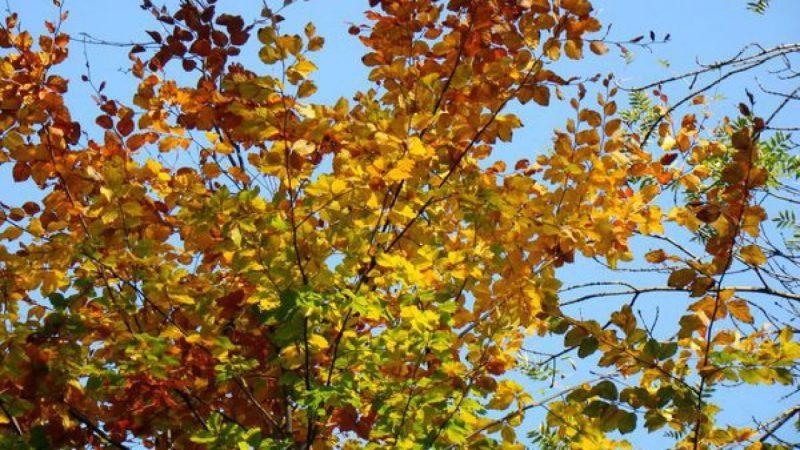 Złota jesień w Parku Roth